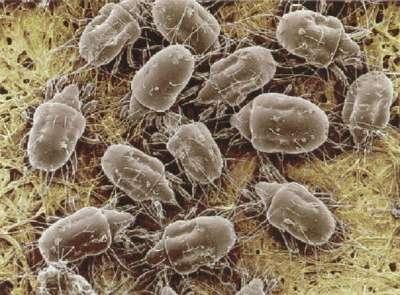 Бытовая пыль и ее обитатели