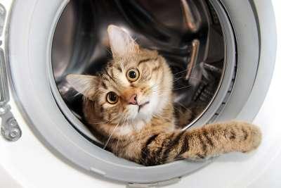 Коты очень любят укромные места