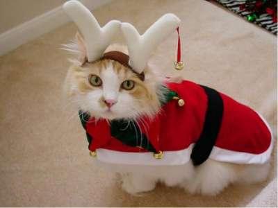Новогодний костюм для кошки