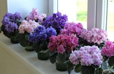 Шестерка правил благополучия комнатных растений. Увядшие цветки следует обрывать