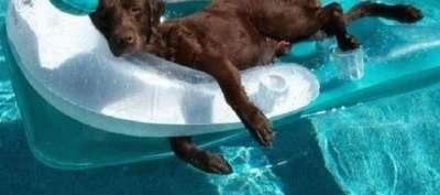 Учим собаку плавать