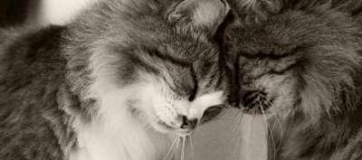 кот или кошка