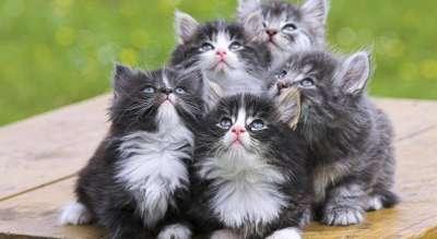 Уход за котенком